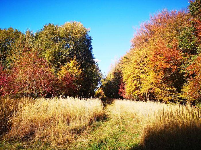 Herbstwald,