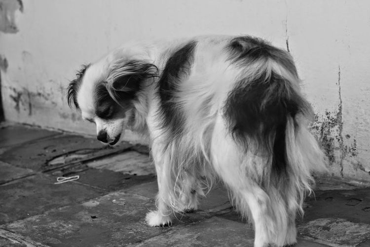 Animal Themes Black & White Black And White Blackandwhite Dog Domestic Animals Lonely No People One Animal Pets