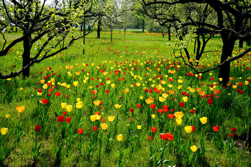Plant Flower Flowering Plant Growth Beauty In Nature Tree Freshness Nature Fragility Field Land Green Color Vulnerability  No People Day Tranquility Red Grass Multi Colored Outdoors Flowerbed Flower Head Springtime