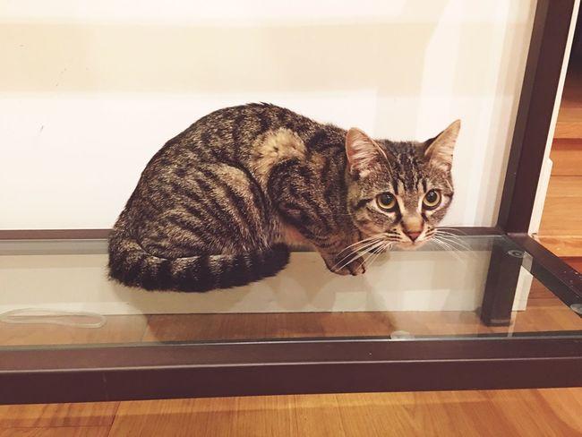 Cat Cat Posing