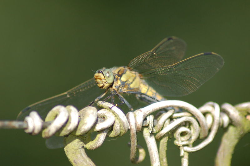 Close-up of dragonfly on tendril