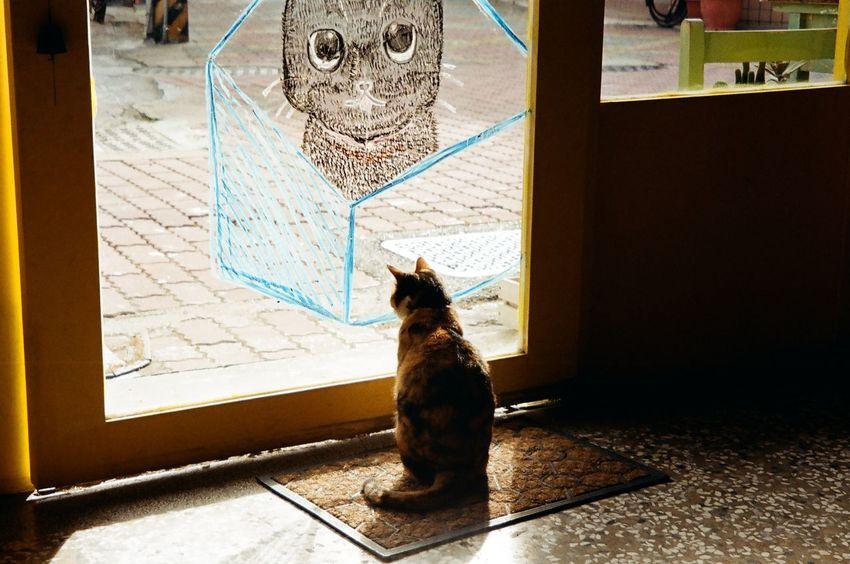 Animal Themes Cat Coffee Shop Scene Day No People Pets Relaxation Tainan, Taiwan 貓門咖啡