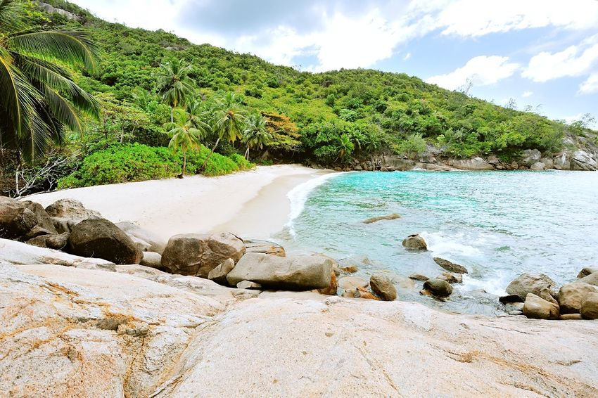 Beach Anse Major on Mahé, Seychelles Africa Beach Beauty In Nature Calm Coastline Day Exotic Island Landscape Nature Non-urban Scene Ocean Outdoors Palm Place Remote Sand Scenic Sea Shore Solitude Tranquility Travel Tropical Water