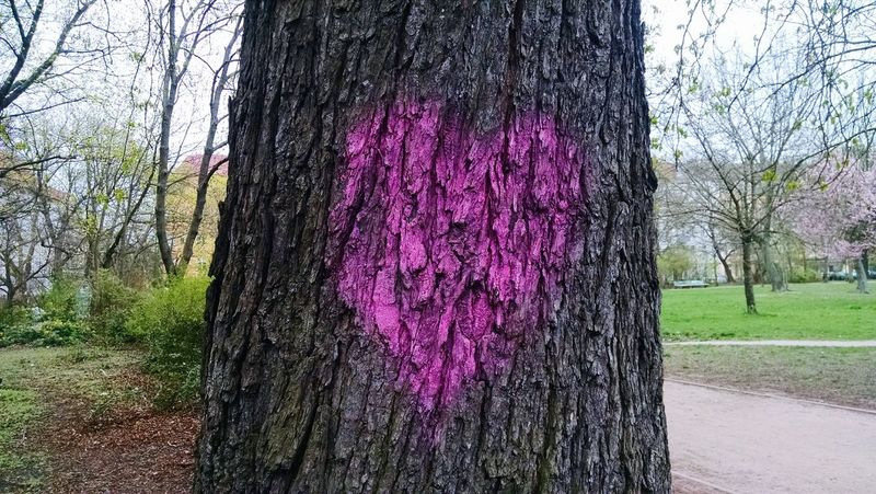 Heart Love Discoveries Tree Treelove Walking Around Walk In The Park