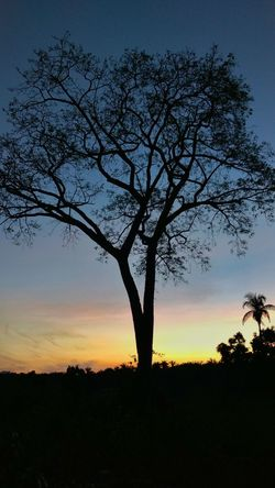 Sky Nature Beauty In Nature Outdoors No People Sunset Tree Late Afternoon
