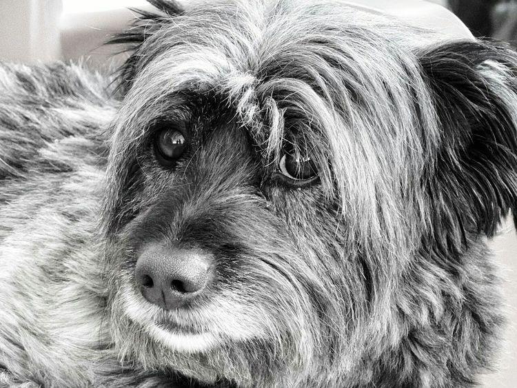 Dogs Of EyeEm Black And White Animal_collection Animal Photography Loveit Pedro Mydog MyLove❤