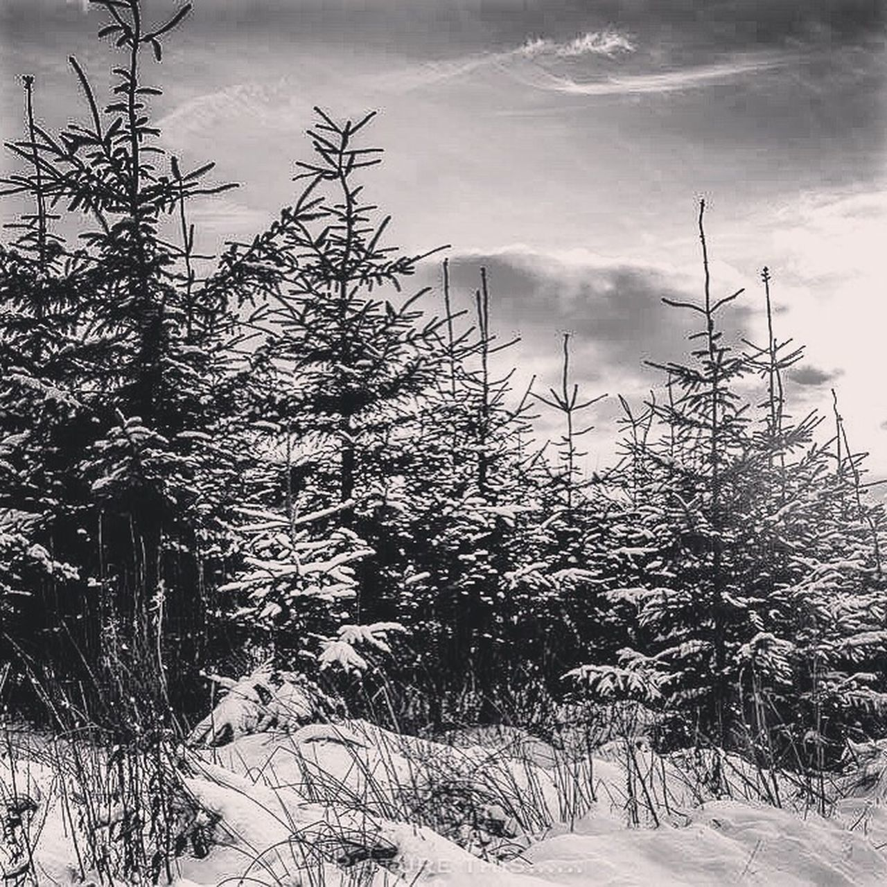 winter, snow, cold temperature, tree, nature, weather, no people, outdoors, day, cloud - sky, plant, growth, landscape, forest, beauty in nature, scenics, rural scene, sky