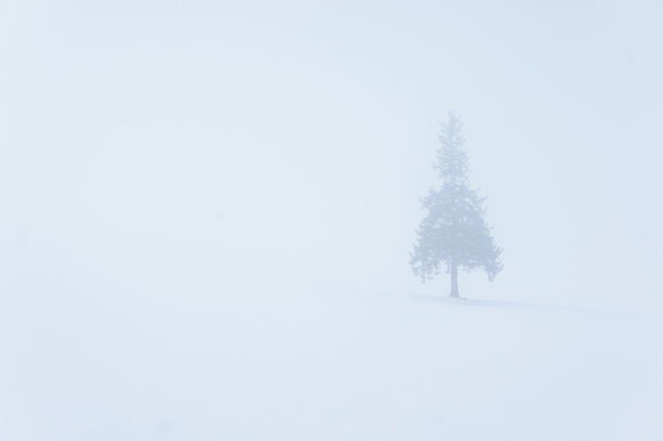 Beauty In Nature Biei Cold Temperature Frozen Hokkaido Japan Japan Photography Landscape Lonely Nature Single Snow Snowing Solo Tree Tree White Color Winter Furano Japan Scenery Winter Wonderland Winter Trees Winter Landscape Snow Covered Snow ❄