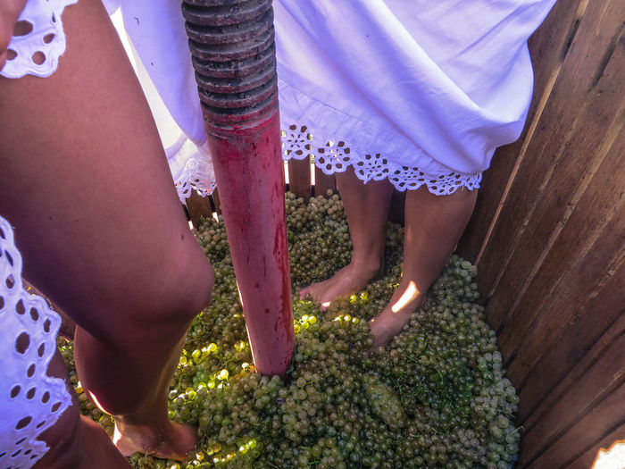 Traditional Grape Harvesting For Wine Making Tradition Barrel For Vine Cantryside Day Grapes Lifestyles Outdoors
