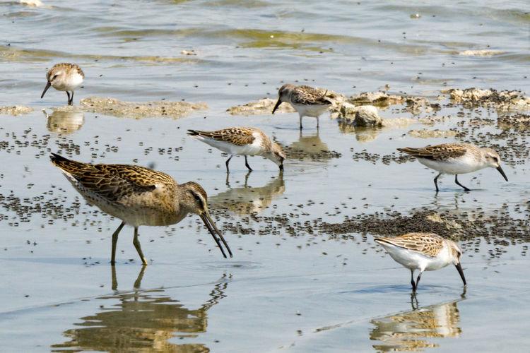 Birds foraging in sea