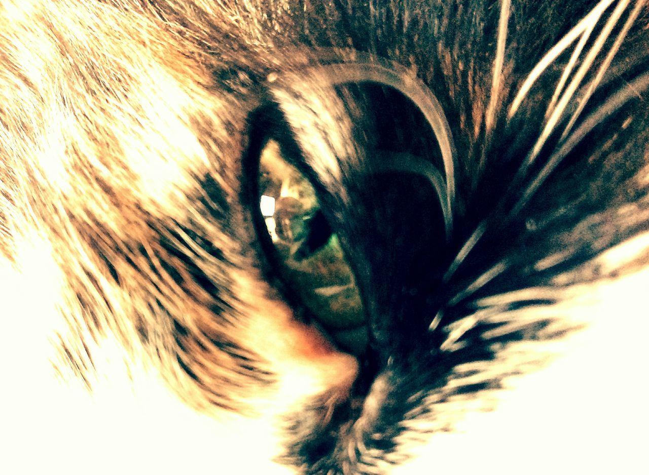 one animal, animal themes, close-up, sensory perception, pets, mammal, human eye, eyelash, domestic animals, backgrounds, day, eyesight, outdoors, portrait, one person, eyeball, nature, people