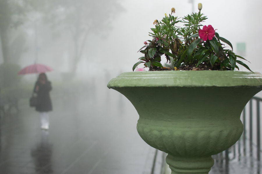 Fine Art Photography Built Structure Close-up Cold Street Life Decoration Flower Focus On Foreground Fog Freshness Green Color Growth Leaf Learn & Shoot: Balancing Elements Low Angle View Mist Nature Outdoors Plant Potted Plant Streetphotography Umbrella The Street Photographer - 2016 EyeEm Awards Urban Nature Street Photography
