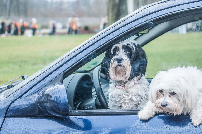 Animal Themes Car Car Interior Close-up Day Dog Dogs Domestic Animals Focus On Foreground Land Vehicle Mammal Mode Of Transport No People One Animal Outdoors Pets Side-view Mirror Southern Germany Transportation