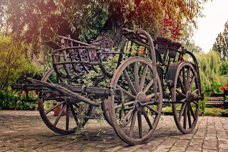 The Week On EyeEm Bicycle Outdoors Mode Of Transport Transportation Plant Day Tree Stationary No People Land Vehicle Growth Nature
