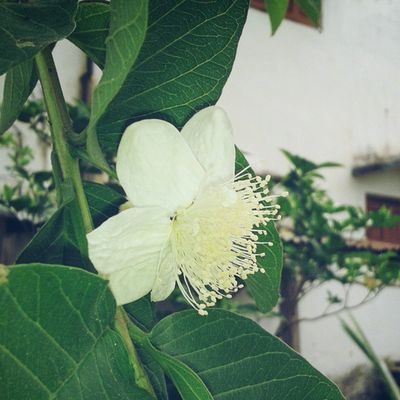 Good Evening Fruits Flower Flowerstagram Instaevening Day End Pic4U Instaaddict Instadaily Followforfollow .