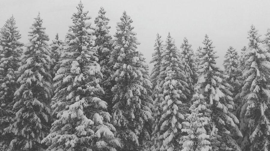 Wintertime Photoftheday White Snow Splugen Switzerland Enjoying Life Taking Photos Photooftheday Skiing