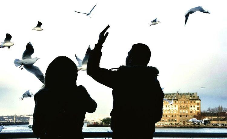 Istanbul Turkey Istanbuldayasam Feel The Journey Istanbullove Seagulls And Sea Seagulls Couple In Love Couple Ferry Passengers Haydarpaşa Garı Voyagediaries City Life