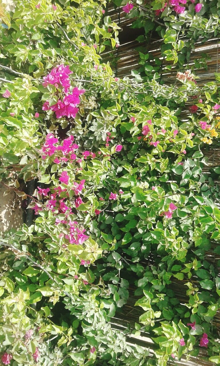 growth, plant, nature, flower, leaf, outdoors, no people, beauty in nature, day, fragility, blooming, freshness