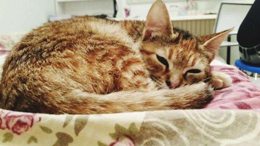 Details Love ♥ Me Venere Kittycat Cat Crazy Cat Sleeping
