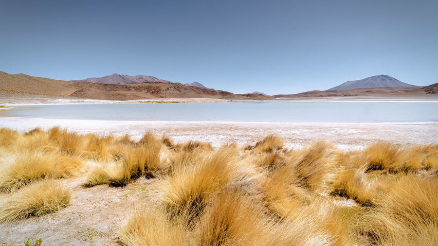 Laguna Honda, Potosi department , Bolivia Altitude Andean Beauty In Nature Bolivia Border Bored Chilean  Clear Sky Day HongKong Laguna Landscape Landscape_Collection Landscape_photography Mountain Mountain Range Nature No People Outdoors Salt - Mineral Scenics Sky Tranquil Scene Tranquility Travel