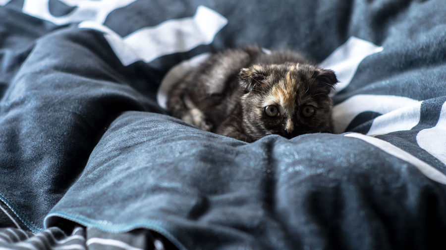 Close-up of cat sleeping on bed