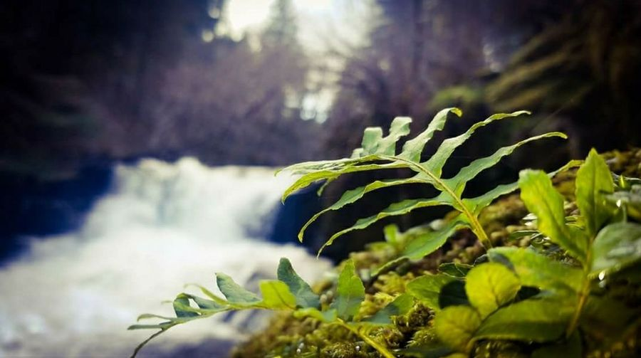 Alsea Falls Fern Nature Plant Leaf Outdoors Green Color Beauty In Nature No People Forest Close-up Scenics Landscape Rural Scene Day Freshness Tree EyeEmNewHere