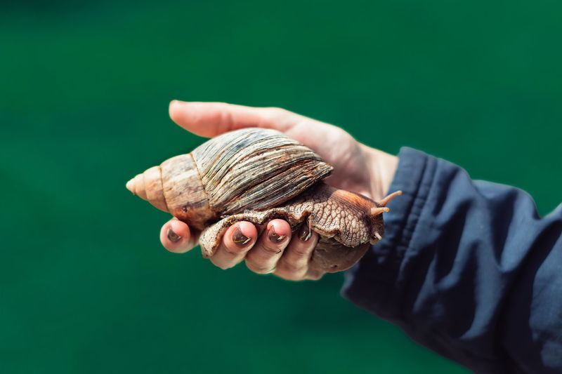 Close-up of hand holding snail against green background