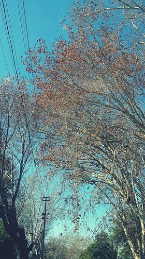 Hello World Greenside Winter Trees Blue Sky Beautiful Nature Beautiful Day Appreciation