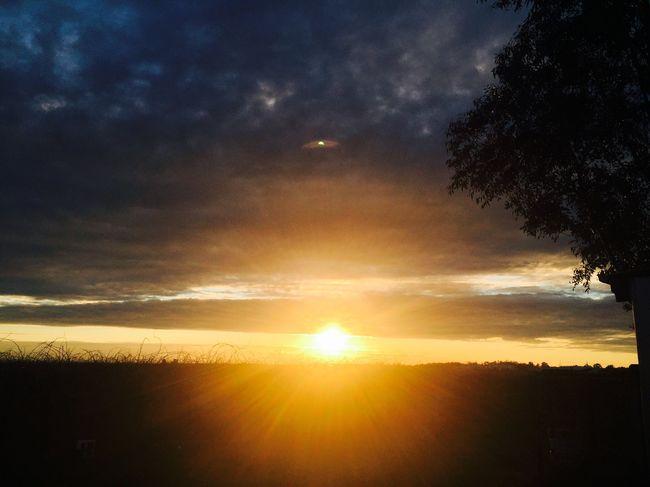 Beautiful evening at grape farm Radcliffe, Victoria