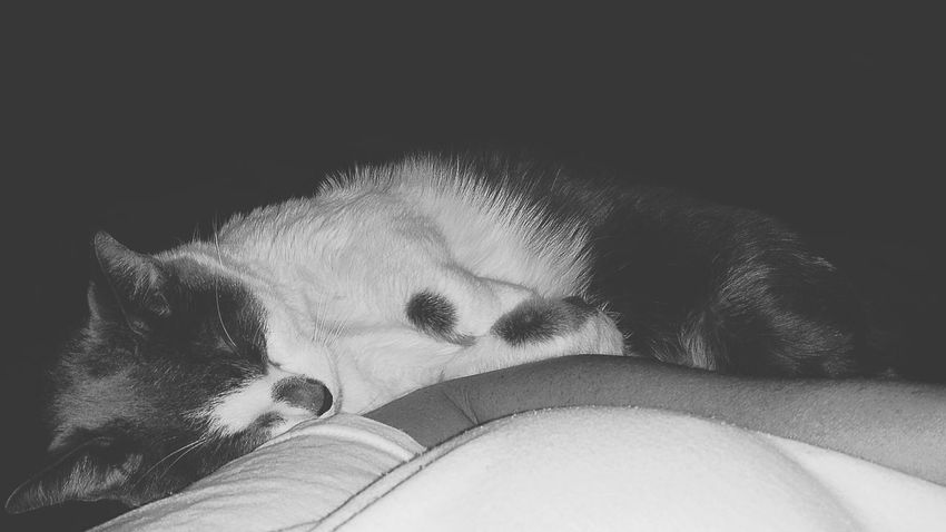 Blk N Wht EyeEm Best Shots Catoftheday Eyeem Black And White Popular Photos Cuddling With My Kitty Furryfriend Lovemycat♥