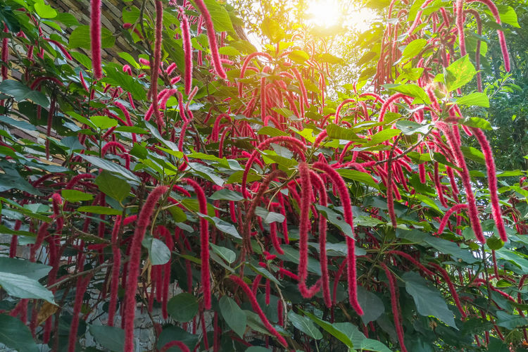Low angle view of red flowering plants against trees
