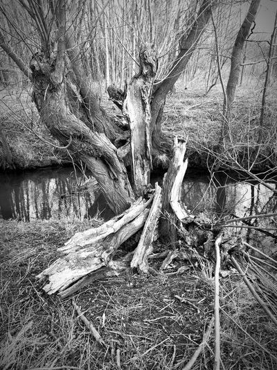 Old dead Tree P10 Huawei Leicacamera Monochrome Blackandwhite Black & White Black White Like Likeit LeicaP10 Followme Huawei Photography Beautiful HuaweiP10 Leicahuaweip10 Thuringen Heimat Deutschland Germany Water Backgrounds Full Frame Textured  Pattern Abstract Close-up Detail Shape