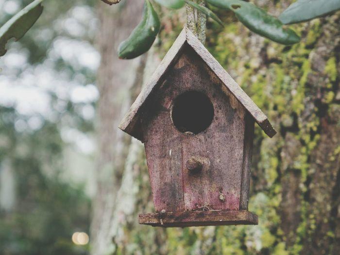 Close-up of birdhouse
