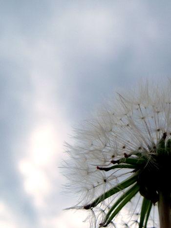 Nikon S610 Reedit ShotOnpast Effects & Filters Close-up Nature Springtime