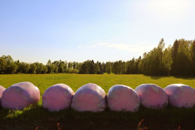 Farmland view Field Hay Bale Pink Color Pink Tree Multi Colored Agriculture Rural Scene Sky Landscape Cloud - Sky Growing Farmland Cultivated Land Agricultural Field Shining