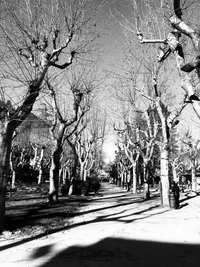 Jardin d'hiver Bnw_worldwide Bnw_captures Bnw_life Sunlight Nature Tree No People Day Shadow Outdoors
