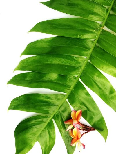 Leaf Plant Part Plant Green Color Beauty In Nature Flower Nature