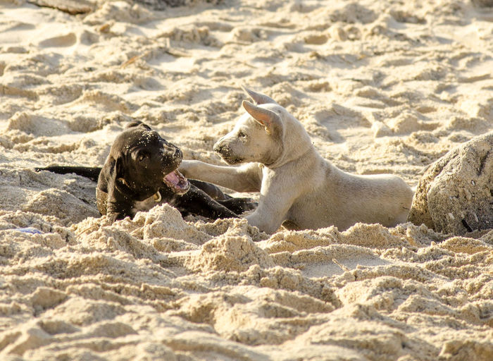 friendship Two Animals Dog Pets Dragonfly Pit Bull Terrier Pet Collar Siberian Husky Animal Family Carnivora Pet Bed Dog Lead Domestic Animals Mating Canine Dachshund Boxer - Dog Animals Mating Seal - Animal Weimaraner Feline Pet Leash Mammal Whisker Beagle Tabby Cygnet Stray Animal Rottweiler Puppy Infant
