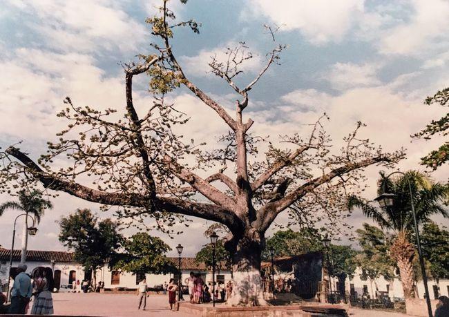 Girón 1984