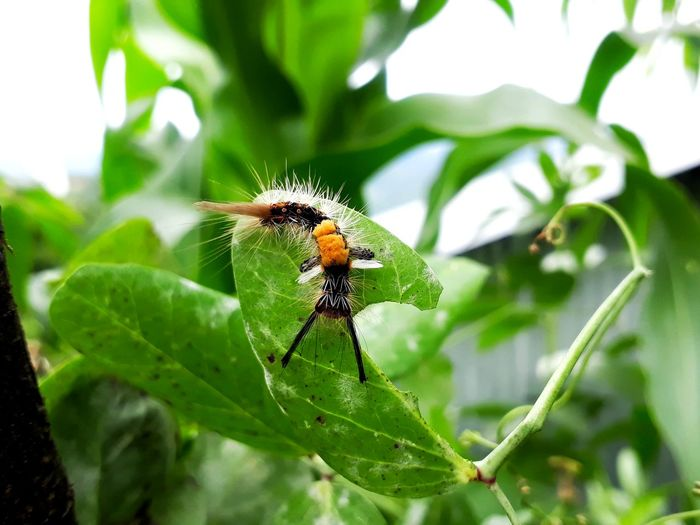 Insects and