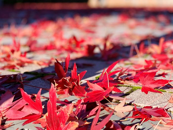 Leaf Plant Part Red Autumn Change Day Nature Leaves