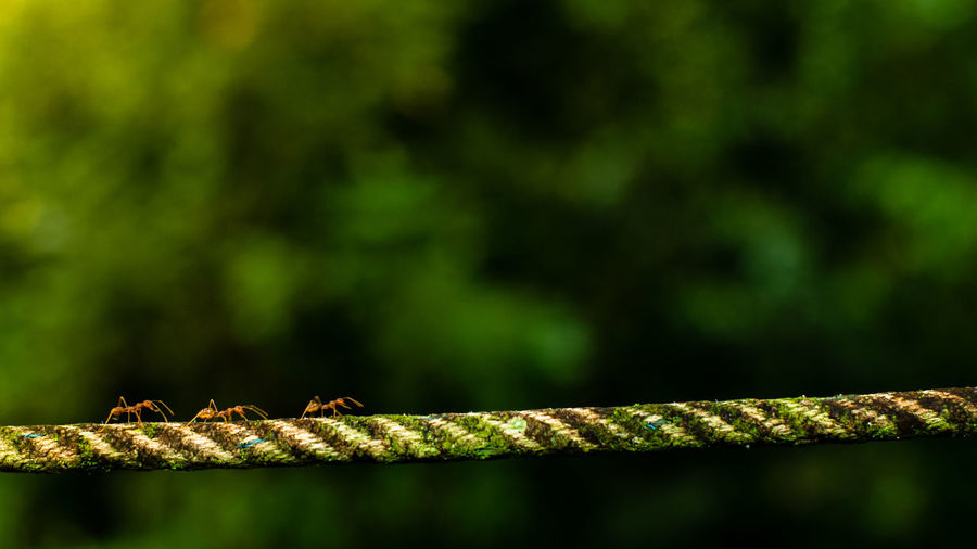 the ants on the rope with green background Animal Themes Animal Wildlife Animal One Animal Animals In The Wild Reptile No People Close-up Nature Day Focus On Foreground Vertebrate Green Color Snake Selective Focus Rope Animal Body Part Outdoors Plant Invertebrate Animal Scale