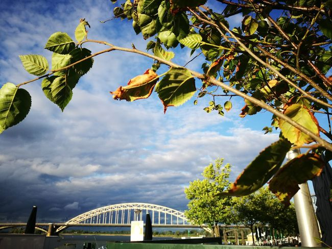 """""""one Nijmegen bridge"""" Tree Cloud - Sky Branch Sky Nature Leaf Day Outdoors Blue Hanging Scenics No People Flying Beauty In Nature"""