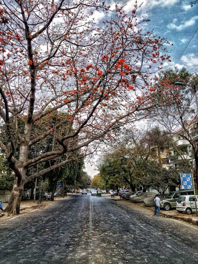 D A Y Sky Flowers Photography People Click Ramdomclick Experiment Human Visual Creativity Dslrphotography Tree Backgrounds Road Sky Close-up Vehicle Full Frame Detail