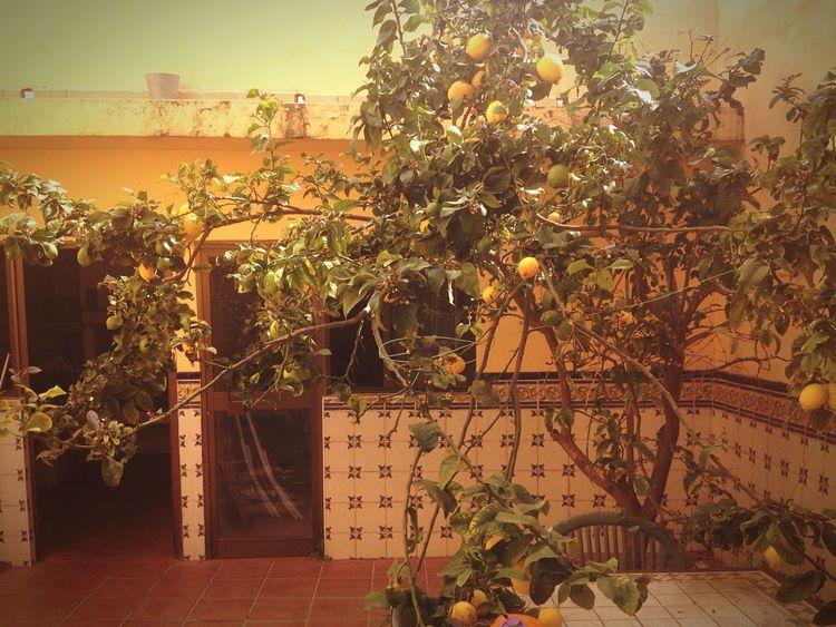 Lemontree Home Sweet Home VeryOldTree