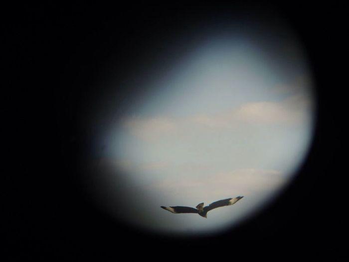 Nature Bird Photography Crestedcaracara