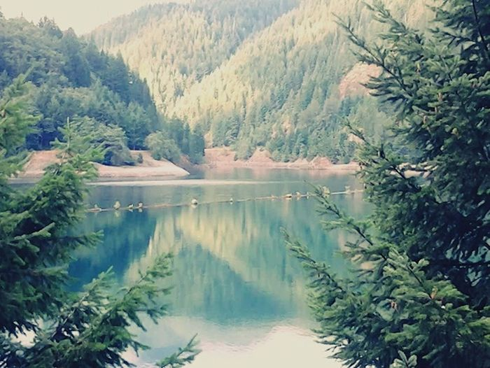 Mountain Tree Pine Tree Nature Forest Beauty In Nature Landscape Scenics No People Lake Tranquility Water Day Outdoors Tranquil Scene