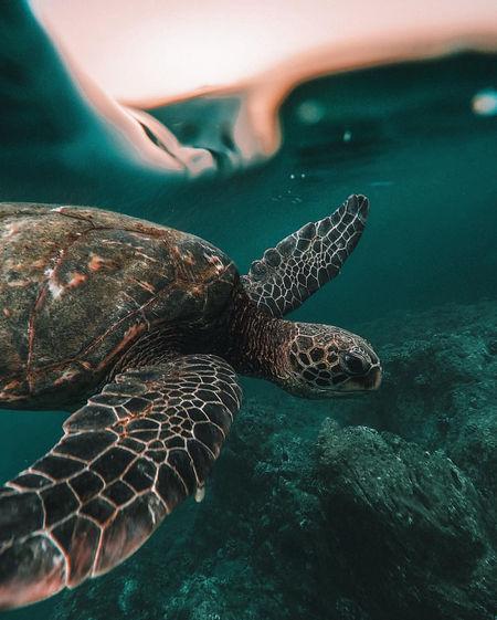 Beatiful turtle in a beach