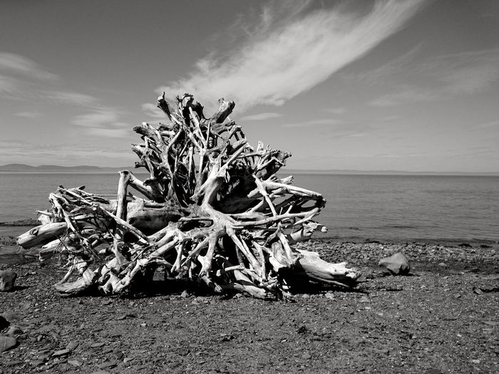 View of driftwood on beach against sky
