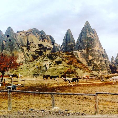 Capadocia Avanos Horses ürgüp